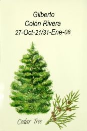 Cedar Tree Memorial Seed Packet